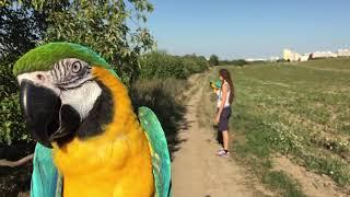 Elinka a Brany na procházkách