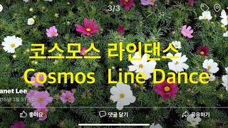 코스모스   라인댄스   Janet Line Dance