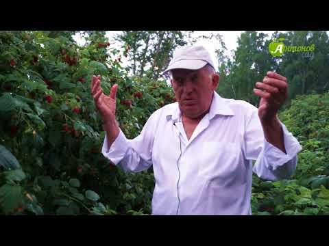 youtube Калинка малинка - ягоды в домашних условиях