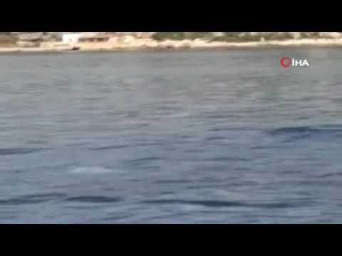 Akdeniz fokundan ibretlik 'çöp tepkisi'