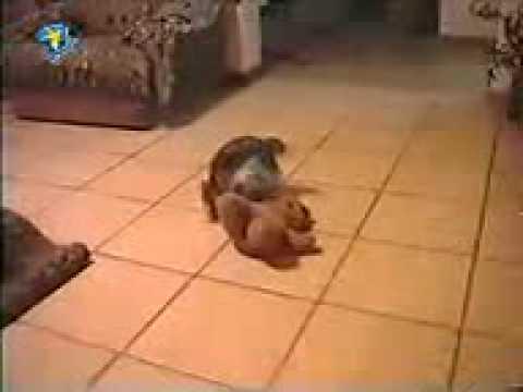 Dog Sex.3gp