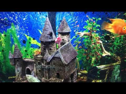 Top Fin 55 Gallon Aquarium Review & Tips