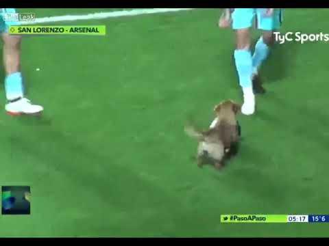 Пес решил помочь футболистам во время матча