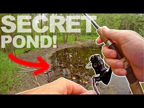 En skjult dam i skoven med solaborrer og bass