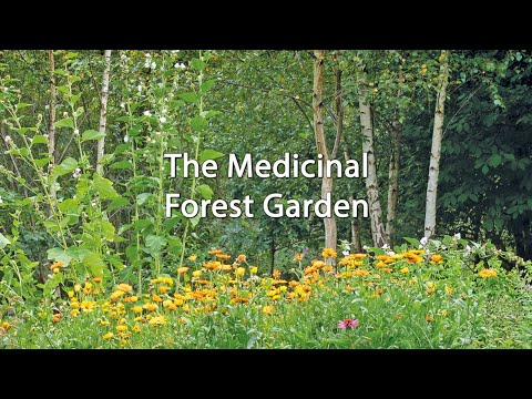 The Medicinal Forest Garden