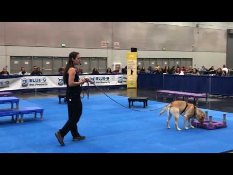 BAT leash skills live demo - for aggression rehab and all dogs (CC ...