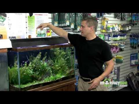 Maintaining the Temperature and pH Balance in Your Aquarium