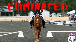 Ways to get eliminated from a dressage test (HILARIOUS)