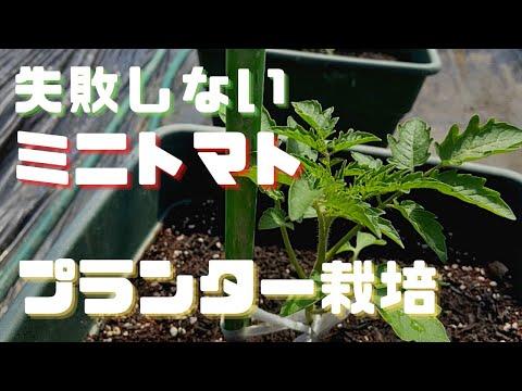 , title : 'はじめての【ミニトマトプランター栽培】買い物から植え付けまで