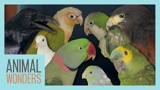 All Of Our Birds! by Animal Wonders