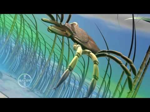 Глисты в рыбе разновидности