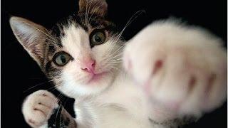 Смешные коты и кошки. Прикольные видео #7 / 2015