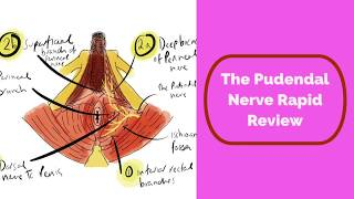 Pudendal Nerve Rapid Review