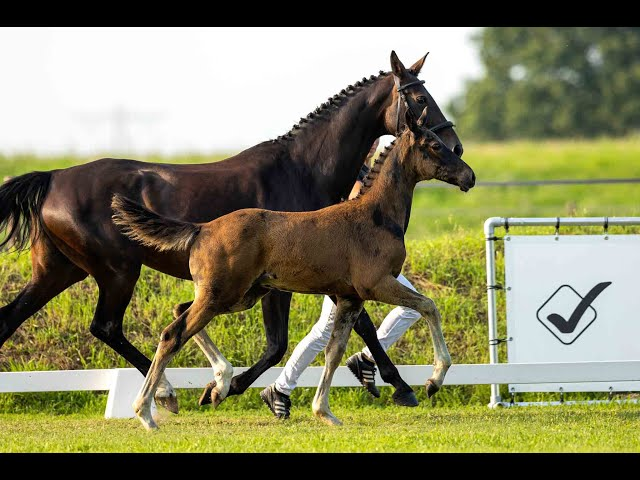 River A, colt by Lewis x Lord Leatherdale x Negro