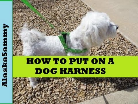 How To Put On A Dog Harness Dollar Tree Harness