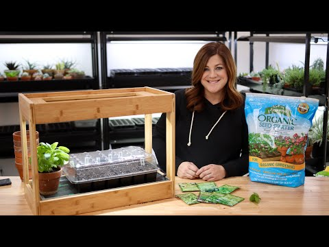 Everything You Need to Know About Growing Herbs Indoors