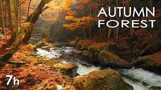 Смотреть онлайн Наслаждаемся атмосферой осени в лесу со звуками природы