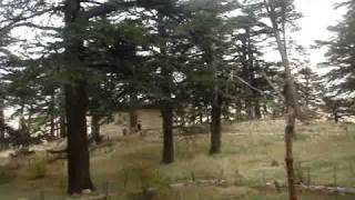 preview picture of video '世界一周の旅レバノン 杉杉杉編 Traveling the world in Lebanon'