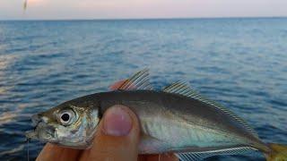 Рыбалка на черном море с берега поплавочной удочкой