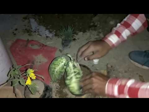 Lyambliya e semi di lino