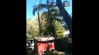 SEBASTOPOL TREE SERVICE