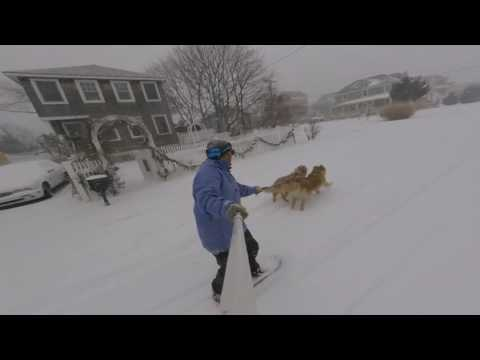 Two Good Boys Pull A Snowboarder Through A Storm