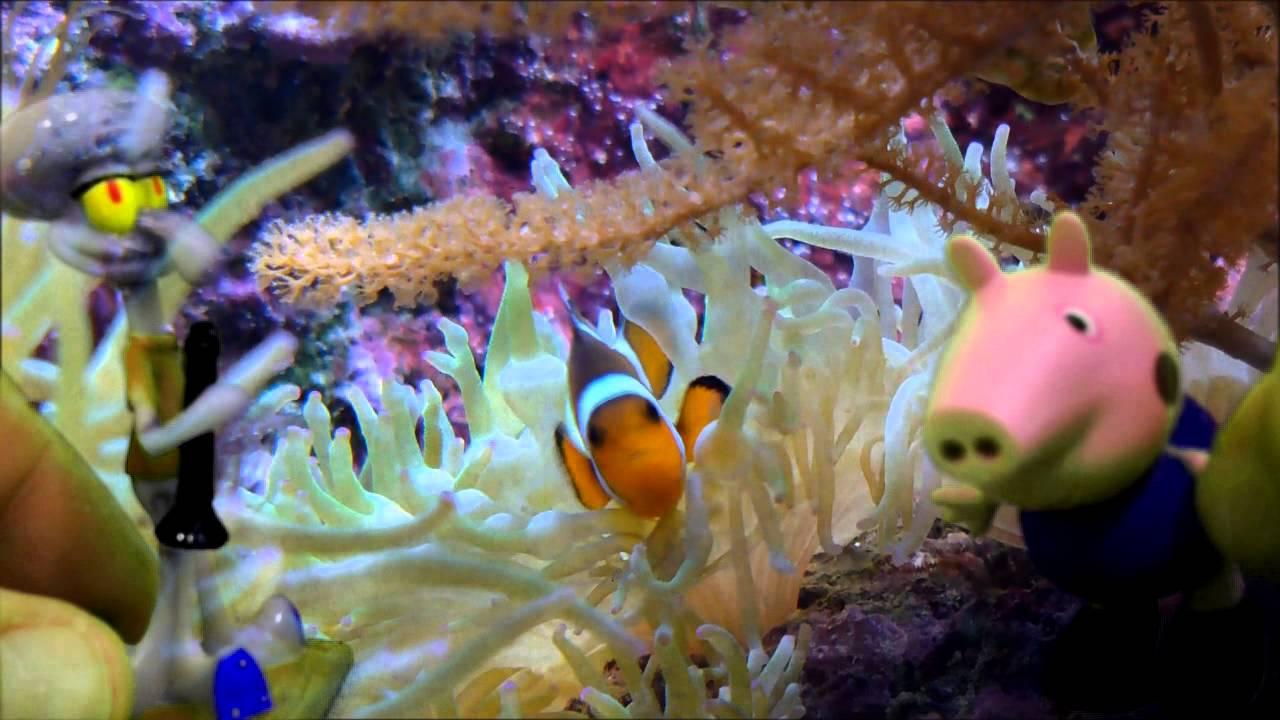 Peppa Pig visita a Calamardo debajo del mar