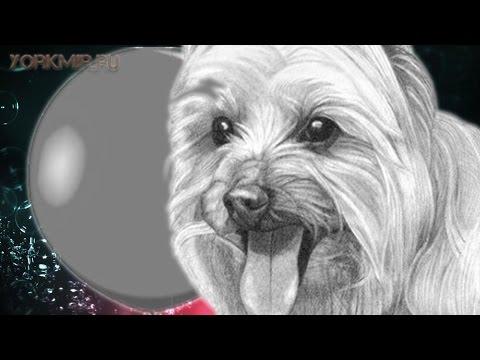 Водянка у собак | Причины | Симптомы | Лечение.