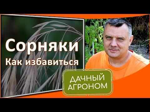 , title : 'Как избавиться от сорняков насовсем на огороде.  дачный агроном рекомендует средство от сорняков