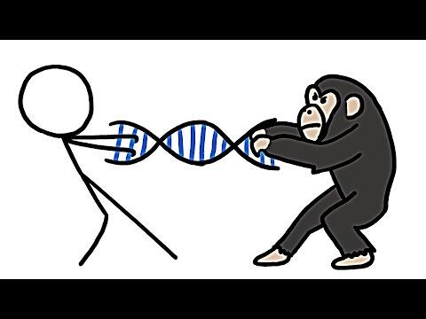 Jsme vážně z 99 % šimpanzi?