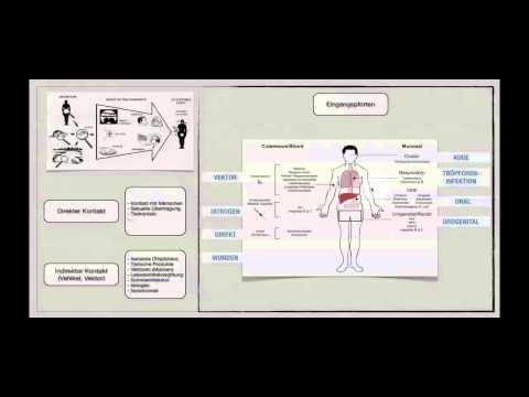 Behandlung von Hypertonie Petersilie