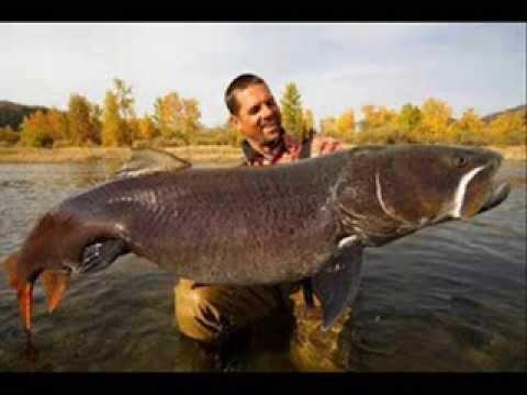 Nuova versione di una pesca russa di gioco