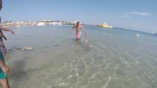 Случайный гость на пляже в Хургаде.Акула немного напугала отдыхающих!
