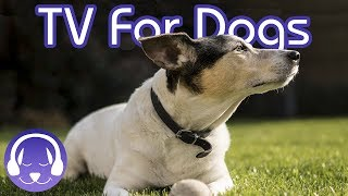 Dog TV: 15 Hours of Entertaining Dog Walks! (2019)