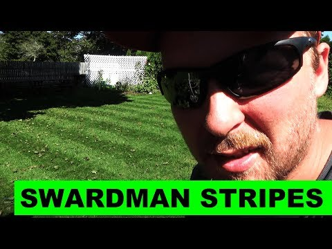 Swardman is back and sharp!