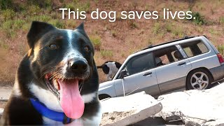Trained Rescue Dog Saving Lives In Disasters | International Dog Day | Love Nature