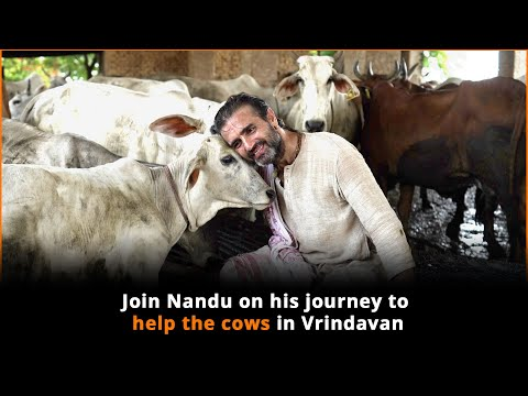, title : '300+ Cows In Vrindavan Need Your Help To Survive