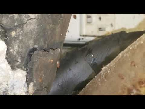 Mold Covered Beer Lines Cause Fruit Flies in Colts Neck, NJ