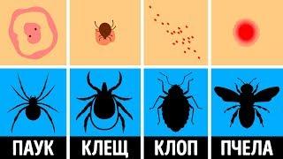 Как распознать укус насекомого и что с ним делать