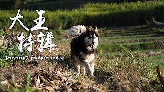 Finally, here comes Dawang's feature video!