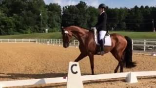 New Sales Horses!