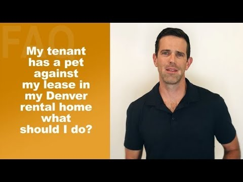 My Tenant Has A Pet Against My Lease In My Denver Rental Home What Should I Do?