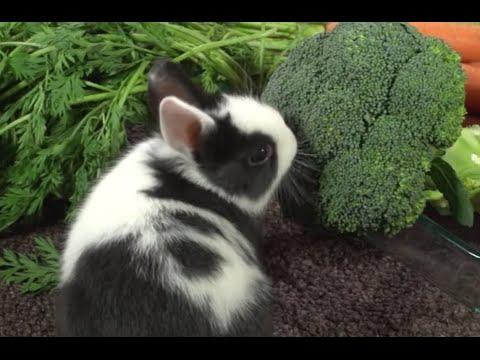 CONEJOS - ¿Qué verduras pueden tomar los conejos?