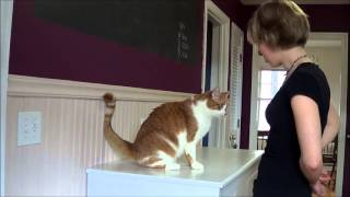 Training a Cat to Sit - Video Youtube