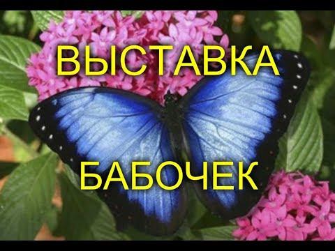 Butterfly Show - Выставка Бабочек