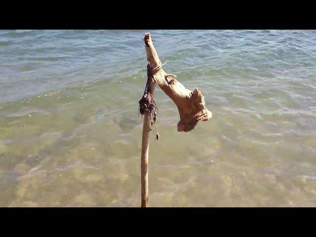 Fishing Mackerel Tropical Style