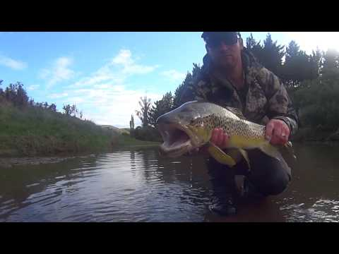 Fly Fishing Low Flows Nz
