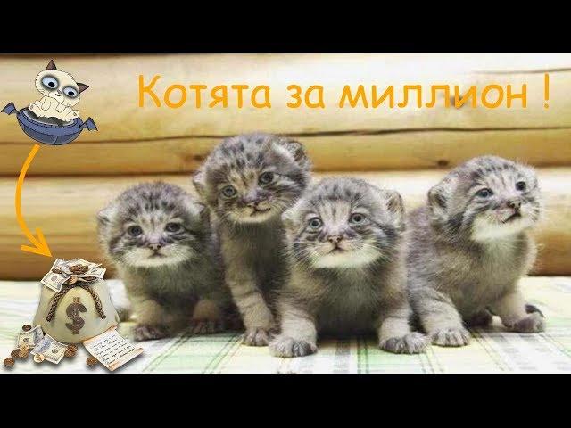 Мужчина спас брошенных котят – ОКАЗАЛОСЬ, ОНИ СТОЯТ ЦЕЛОЕ СОСТОЯНИЕ (2018) Видео для детей и взрослых