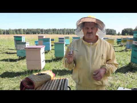 Инвентарь для пчеловодства - что необходимо пасечнику