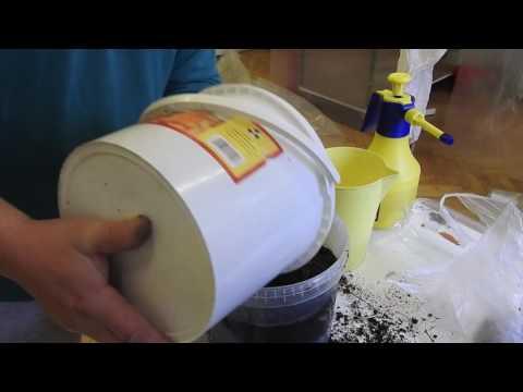 Kyzyl May parazitaellenes gyógyszerek